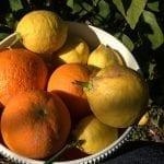 Fruits from garden